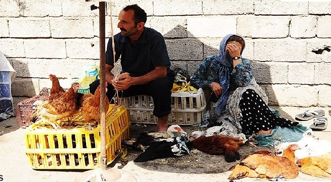 Two charged with selling live chickens in Sardasht each sentenced to two months imprisonment.