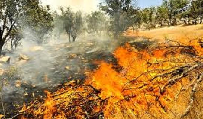 Again arson in nature East Kurdistan