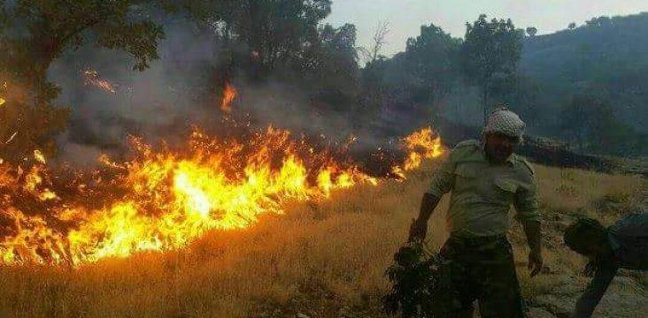 Again fire Kermanshah forests in Kurdistan East.