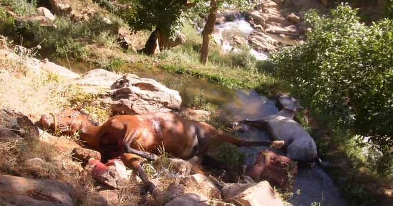 Confiscation of property businessman and killing two vertices horses by the special unit of the Islamic Republic of Iran in the city of Sanandaj