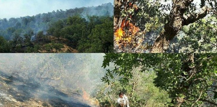 Continuity fire of Zagros forests and pastures in east Kurdistan and widespread environmental degradation