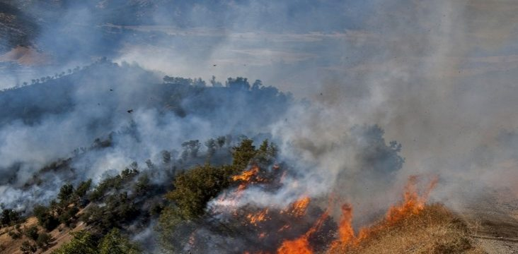 The fires in the jungles of eastern Kurdistan have destroyed a lot of gardens and pastures