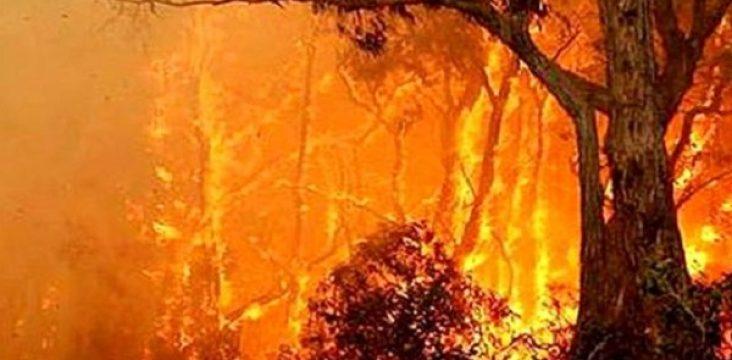 Fire in 18 area of functions the city Dersim in northern Kurdistan