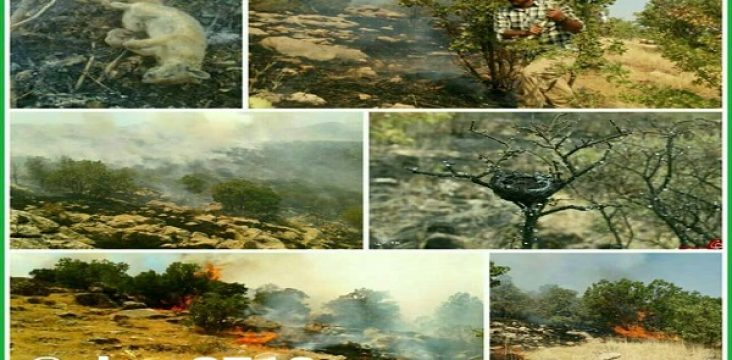 Iranian Revolutionary Guards Islamic Republic of Iran under the pretext of military maneuvers until at 3 afternoon the barrier was to shut off the Shahu forests.